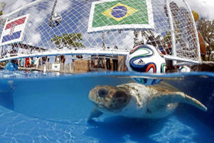 Big Head the Turtle goes with Brazil