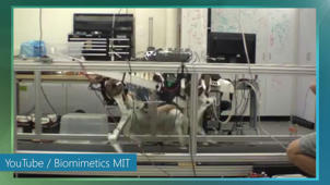 MIT researchers create stunningly efficient robot cheetah