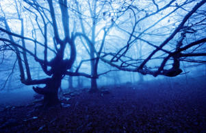 The mysterious forest of Transylvania has captivated the world for more than 50 ...