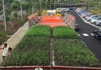 Singapore unveils public bus that has moving garden on roof