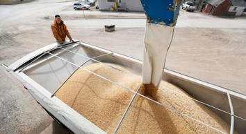 Terry Morrison of Earlham, Iowa, watches as soybeans are loaded into his trailer at the Heartland Co-op, Thursday, April 5, 2018, in Redfield, Iowa. (AP Photo/Charlie Neibergall)