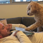 Dog demands attention by pushing down laptop screen
