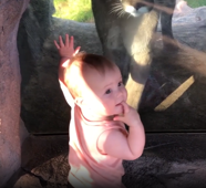 Little girl on zoo visit wants to hug mountain lion