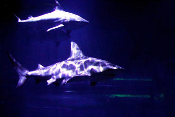 With tornadoes bearing down, an aquarium encouraged guests to take shelter with its sharks
