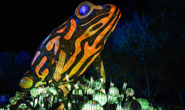 Slide 1 of 40: SYDNEY, AUSTRALIA - MAY 19: An illuminated lantern sculpture of a frog during the media preview of Vivid Sydney at Taronga Zoo on May 19, 2019 in Sydney, Australia. An illuminated trail of almost 300 lit lanterns of endangered species will glow every night at the zoo during Vivid Sydney which runs from May 24 throughout Sydney with hundreds of lit buildings and exhibits which attract hundreds of thousands of visitors each year. (Photo by James D. Morgan/Getty Images)