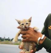 Här stoppar de trafiken för att rädda en liten kattunge
