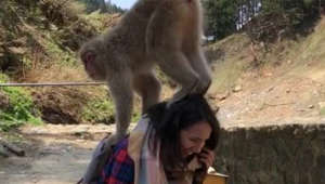 Monkey won't stop jumping on tourist's head in Japan