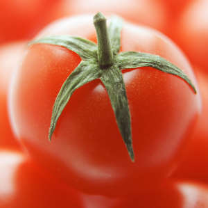 Tomato, close up. (Photo by FlowerPhotos/UIG via Getty Images)