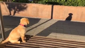 Confused dog barks at her shadow at community park