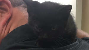 K-9 officer rescues kitten dumped on interstate