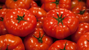 Close up image of tomatoes for sale at Pike Place Market in Seattle, WA.