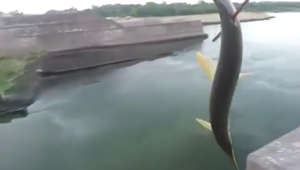 Man shoots and catches fish amazingly with help of bow