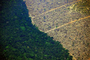 Aerial picture showing a deforested piece of land in the Amazon rainforest near an area affected by fires, about 65 km from Porto Velho, in the state of Rondonia, in northern Brazil, on August 23, 2019. - Bolsonaro said Friday he is considering deploying the army to help combat fires raging in the Amazon rainforest, after news about the fires have sparked protests around the world. The latest official figures show 76,720 forest fires were recorded in Brazil so far this year -- the highest number for any year since 2013. More than half are in the Amazon. (Photo by CARL DE SOUZA / AFP)        (Photo credit should read CARL DE SOUZA/AFP/Getty Images)