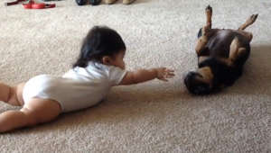 Dog's first interaction with baby is the cutest thing you'll see today!