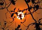 A picture taken on October 16, 2017 in Le Gavre, western France, shows oak leaves silhouetted in the Autum sun. / AFP PHOTO / LOIC VENANCE        (Photo credit should read LOIC VENANCE/AFP/Getty Images)