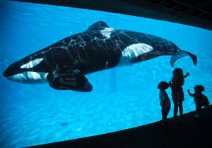 Young children get a close-up view of an Orca whale during a visit to the animal theme park SeaWorld in San Diego, Calif.
