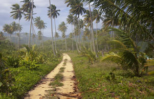 Path along the beach in the Dominican Republic.