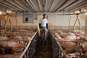 A farmer  walks between pens of hogs on his farm in Walcott, Iowa