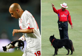 In pics: Animals invading sports pitches