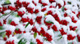 Cotoneaster berries covered in snow