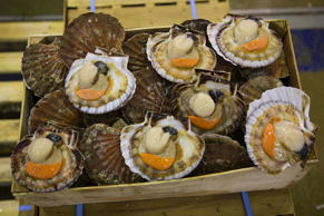 Marlborough Sounds residents and recreational fishers warn that scallops could disappear from the area.