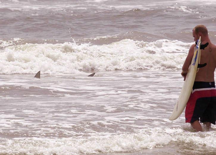 Gran tiburón se cuela en la jaula de un buceador