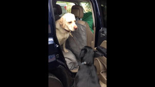 Cute Dog Helps His Buddy Out Of The Car!