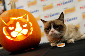 "IMAGE DISTRIBUTED FOR FRISKIES - Friskies® ""official spokescat,"" Grumpy Cat, com..."