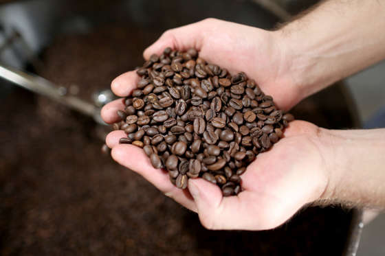 MARGATE, FL - MARCH 10: Robert A. Spuck Jr., director of manufacturing, shows off freshly roasted coffee beans as he produces the Miami Beach blend of coffee at the Kana Coffee Roasters on March 10, 2015 in Margate, Florida. A panel of government-appointed scientists at the Dietary Guidelines Advisory Committee charged with proposing changes to U.S. dietary guidelines announced recently that three to five cups of coffee daily do not have long-term health risks, and help reduce the risk for heart disease and type 2 diabetes.