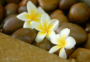 Spa details from the tropical island of Koh Samui © Michelle Chaplow.