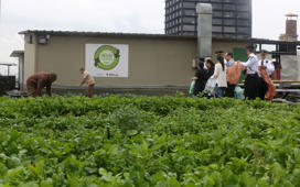 File: Employees of Eldorado shopping mall harvest vegetables from an organic vegetable garden on the roof of the mall in Sao Paulo, Brazil, July 8, 2015.