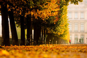 Autumn in Les Tuilleries in Paris.