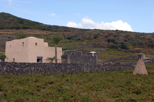 A plantation of Zibibbo vines at the new Khamma cellar of Donnafugata on the island of Pantelleria, Italy.