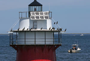 Birds perched at Duxbury Pier lighthouse, also called Duxbury Light or 'Bug Light,' located in Plymouth Harbor.