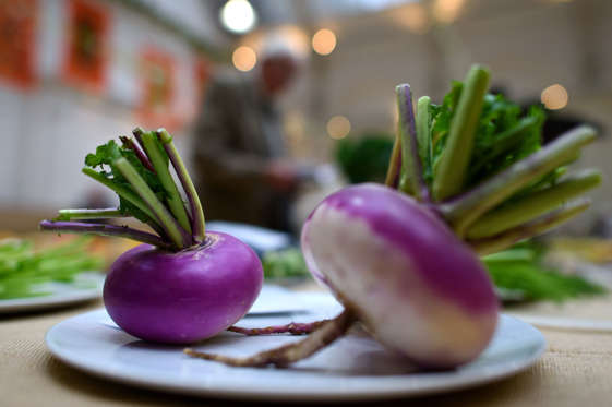 LONDON, ENGLAND - OCTOBER 06: A turnip on display during the RHS (Royal Horticultural Society) London Harvest Festival Show at RHS Lindley Halls on October 6, 2015 in London, England. The traditional harvest themed show runs October 6-7 and showcases a wide range of late summer grown fruit and vegetables.