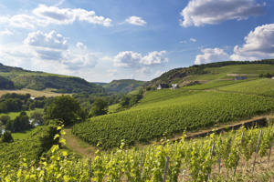 Vineyards at Nahe valley near Schlossboeckelheim,  Rhineland-Palatinate.