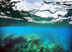 "A wave breaks above a coral escarpement in an area called the 'Coral Gardens' located at Lady Elliot Island and 80 kilometers north-east from the town of Bundaberg in Queensland, Australia, June 10, 2015. UNESCO World Heritage delegates recently snorkeled on Australia's Great Barrier Reef, thousands of coral reefs, which stretch over 2,000 km off the northeast coast. Surrounded by manta rays, dolphins and reef sharks, their mission was to check the health of the world's largest living ecosystem, which brings in billions of dollars a year in tourism. Some coral has been badly damaged and animal species, including dugong and large green turtles, are threatened. UNESCO will say on Wednesday whether it will place the reef on a list of endangered World Heritage sites, a move the Australian government wants to avoid at all costs, having lobbied hard overseas. Earlier this year, UNESCO said the reef's outlook was ""poor"". Picture taken June 10, 2015."