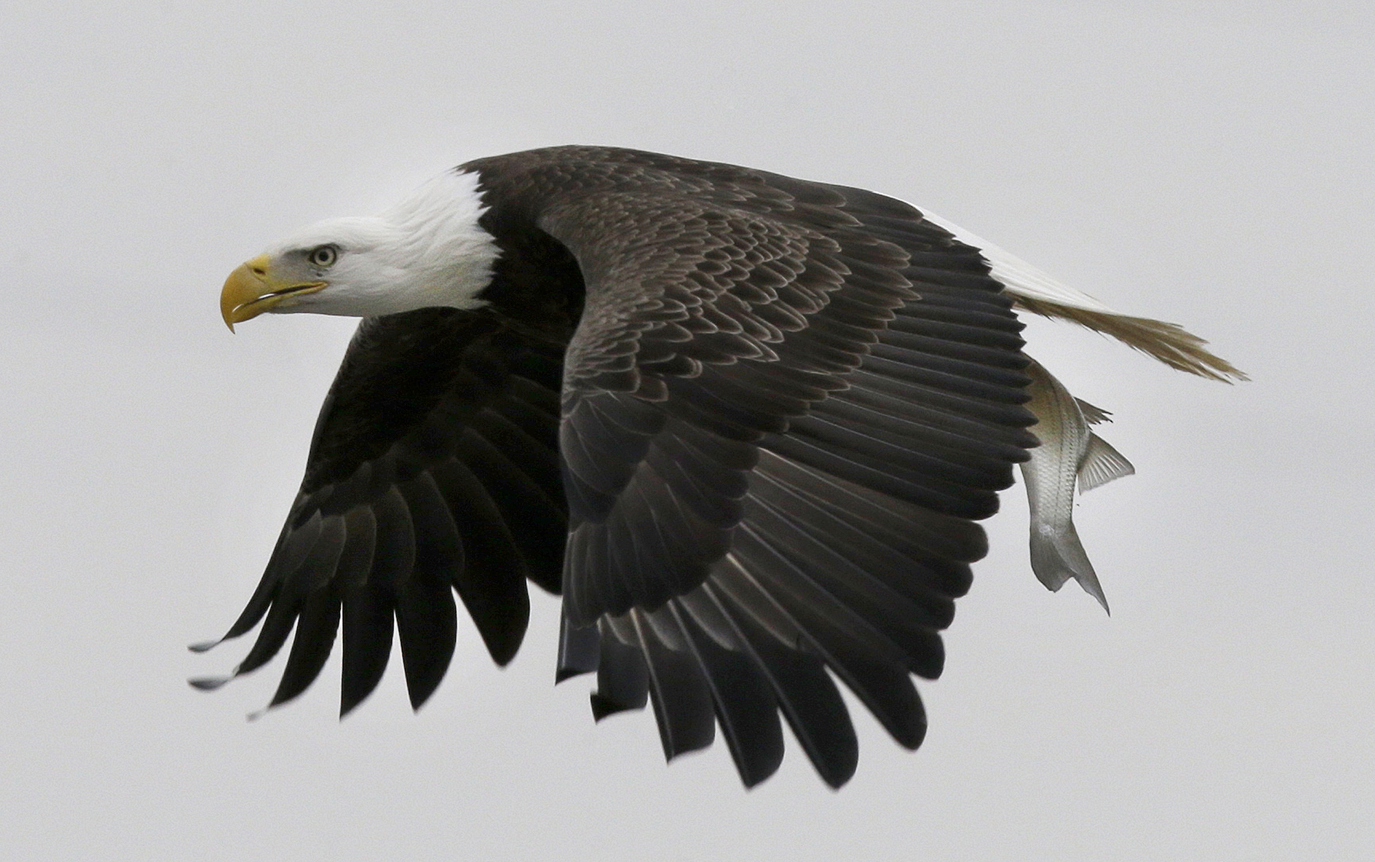 Sharpshooting U.S. veteran frees trapped bald eagle in Minnesota