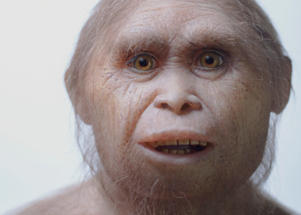 "This 2015 picture provided by Kinez Riza shows a reconstruction model of Homo floresiensis by Atelier Elisabeth Daynes at Sangiran Museum and the Early Man Site. In a paper released Wednesday, June 8, 2016, researchers say newly-discovered teeth and a jaw fragment, which are about 700,000 years old, have revealed ancestors of Homo floresiensis, also known as ""hobbits,"" our extinct, 3 1/2-foot-tall evolutionary cousins. The fossils were excavated about 46 miles from the cave where the first hobbit remains were found in Indonesia."