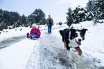CRADLE MOUNTAIN, AUSTRALIA - JUNE 25: Maddie Behrens (6yrs) enjoys the winter snowfall with her mum, Erika Behrens and Cooper the collie on June 25, 2016 in Cradle Mountain, Australia. Snow has been forecast across Eastern Australia as cold front continu