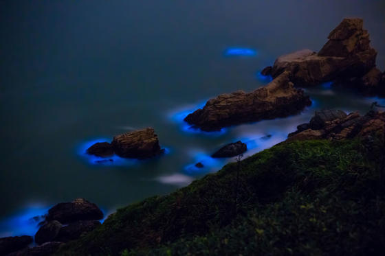 Slide 1 of 20: Bioluminescent algae Noctiluca Scintillans on the Matsu island