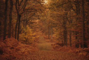 The autumn colours of New Forest foiliage, Bramshaw, Hampshire circa 1980. (Photo By RDImages/Epics/Getty Images)