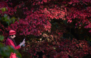 A visitor photographs autumn colours and foliage at Westonbirt near Tetbury in southwest England