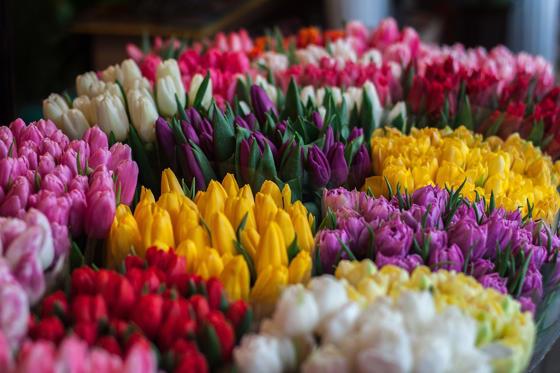 <p>C'est peu connu, mais la plupart des fleurs que l'on achète chez le fleuriste ne proviennent pas du Québec. Les tulipes, par exemple, arrivent ici par avion des Pays-Bas. Si on ne trouve pas de solution de rechange au carburant à base de pétrole pour faire voler les avions, un bouquet de tulipes pourrait donc passer de 20 $ à 100 $.</p>
