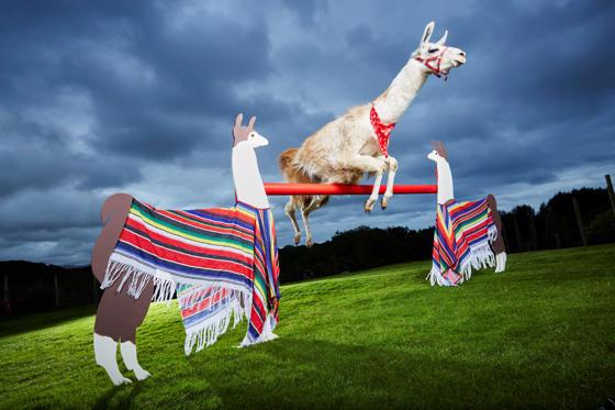Highest Jump by a Llama