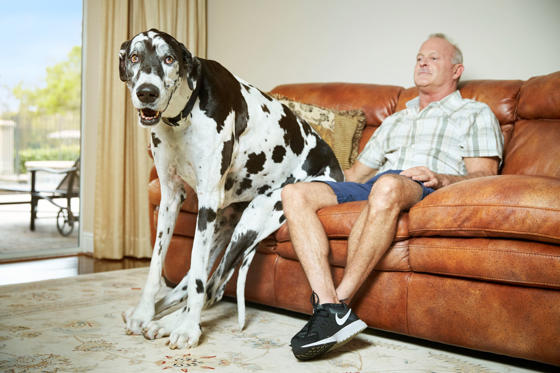 Tallest Dog (female)- Lizzy