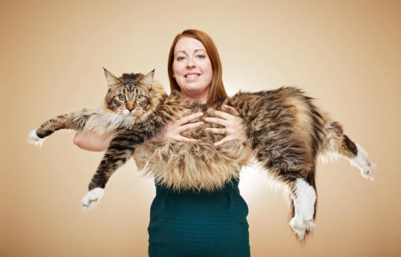 Longest Cat- Ludo