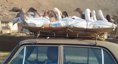 Man transports ducks to market in unusual way