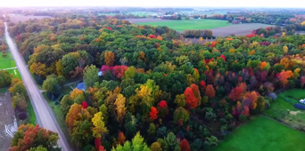 Drone captures colourful autumn leaves