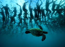 KAILUA KONA, HI - OCTOBER 08:  In this handout photo provided by IRONMAN. The green sea turtle, also known as 'Honu', is a symbol of good luck and longevity in Hawaiian lore. This native friend provides a little mystique to the 2,300 athletes who await t